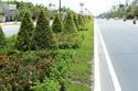 Thời sự tuần qua: Chi tiền 'khủng' để chăm cây xanh