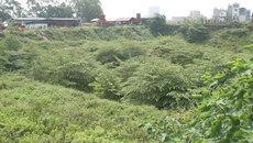 Hà Nội: Ngỡ ngàng rừng rậm trong hầm chung cư