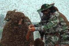 Phá kỷ lục Guinness với hơn 1 tạ ong bu kín người