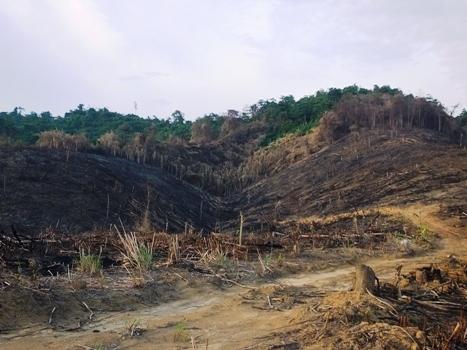Rầm rộ mở đường, phá rừng mà kiểm lâm không biết