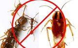 Tự chế thuốc diệt gián, kiến không độc hại tại nhà