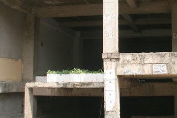 Khó tin Hà Nội: Ao cá trong tầng hầm chung cư