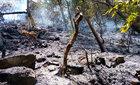 Gần 2.000 người đã khống chế được đám cháy rừng