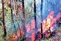 Cháy rừng trở lại ở Thanh Hóa, lan rộng cả 2 huyện