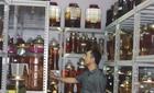 Hầm rượu ngâm 3.000 củ  sâm ngọc Linh
