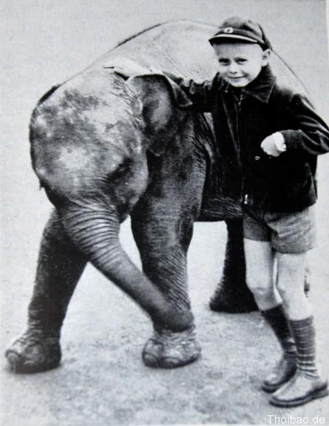 Tìm kiếm chú voi được Bác Hồ tặng công viên ở Berlin