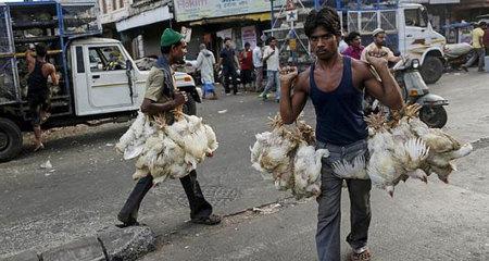 Giá thịt gà tăng kỷ lục vì nắng nóng