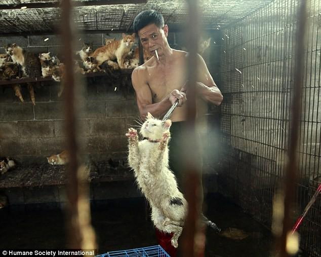 Giết thịt hàng ngàn con chó để phục vụ hội làng