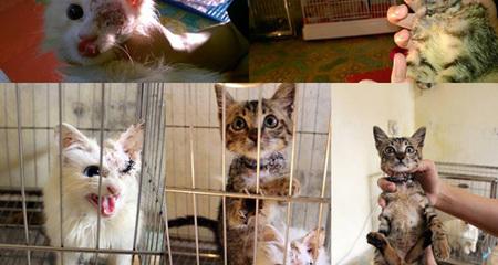 Hà Nội: Dịch vụ điện châm, phẫu thuật chó mèo chiều lòng nhà giàu