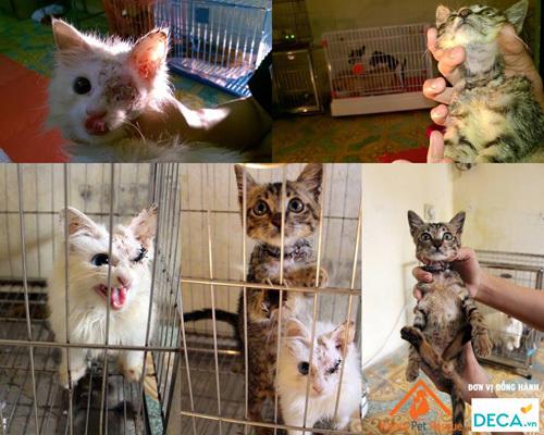 chó mèo, dịch vụ, nhà giàu, Hà Nội, chăm sóc, thú cưng, chó-mèo, dịch-vụ, nhà-giàu, Hà-Nội, chăm-sóc, thú-cưng,