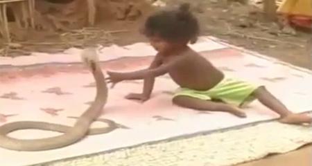 10 clip 'nóng': Em bé đùa với hổ mang chúa như đồ chơi