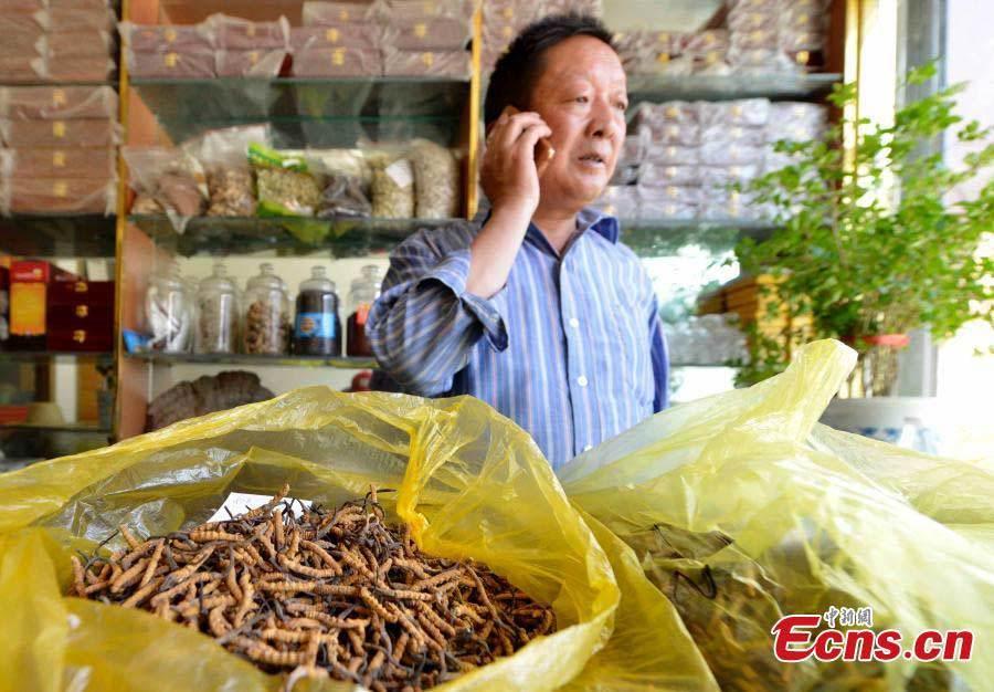 Đông trùng hạ thảo được bày bán như rau xanh