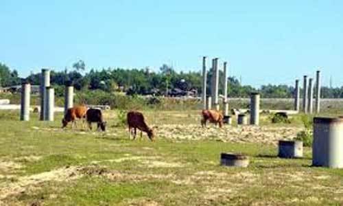 Dự án tỷ đô để... chăn bò: Chiếc bánh vẽ 'bốc mùi'
