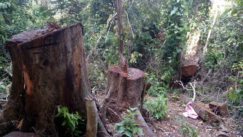 Thanh Chương; gỗ lậu; phá rừng