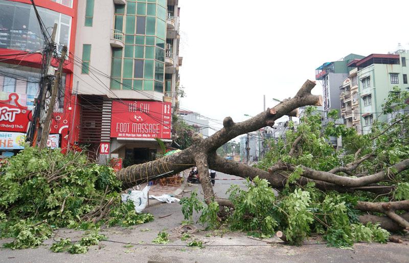 Cây xanh Hà Nội bị quật tơi tả sau cơn dông lốc cấp 8