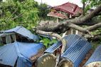 Thời sự tuần qua: 2 người chết, 1.000 cây đổ trong mưa lốc
