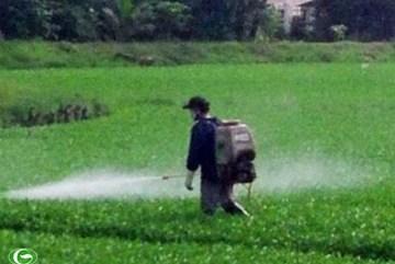 Rau muống tắm hóa chất tại TP.HCM chờ vào miệng người dân