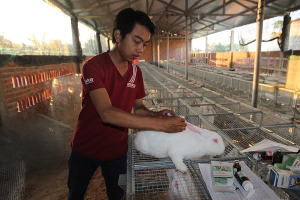 nuôi thỏ, lập nghiệp, thanh niên, bằng cấp