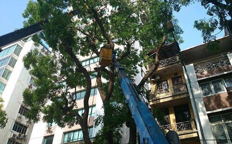 cưa cây cổ thụ, đổ nghiêng, đè sập, nhà 4 tầng, Hà Nội