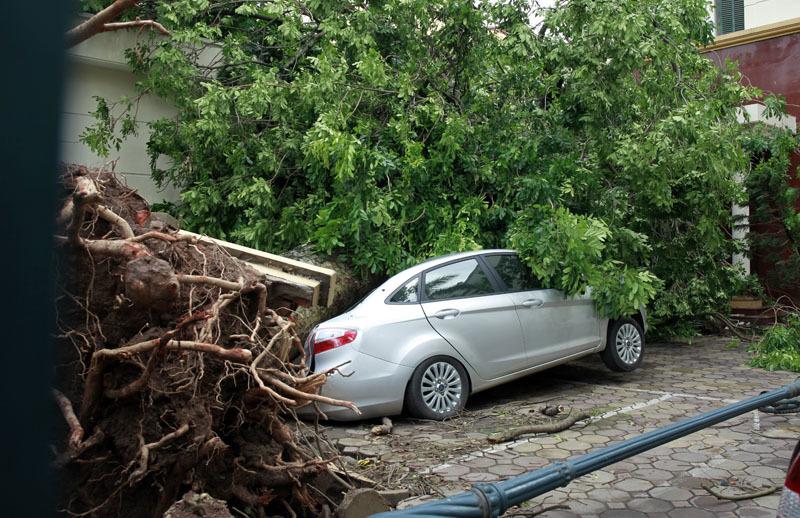6 người bị cây đổ đè chết chưa được chủ cây bồi thường - 2
