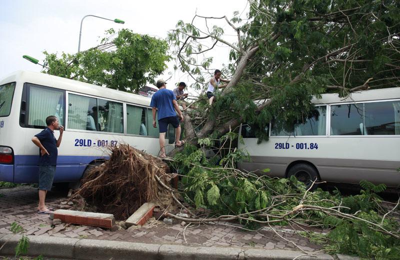 6 người bị cây đổ đè chết chưa được chủ cây bồi thường - 1