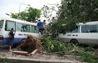 6 người bị cây đổ đè chết chưa được chủ cây bồi thường
