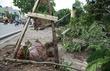Thời sự trong ngày: HN nói về vụ 'trồng cây cả bầu'