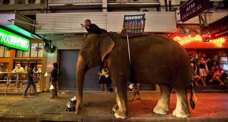 Bị voi húc chết khi đang ăn tối trên bờ biển