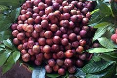 Hàng Tàu đội lốt Sa Pa, rau quả Trung Quốc tràn chợ