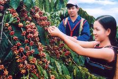 Kinh tế Tây Nguyên khởi sắc nhờ nâng cấp đường Hồ Chí Minh