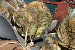 Con trai biển 250kg giá 40 triệu đồng