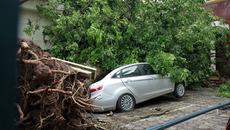 Hà Nội chặt hàng loạt cây vì bão