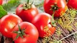 10 loại thực phẩm ăn nhiều không lo béo