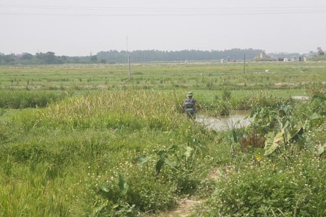 Kết quả hình ảnh cho Hình ảnh ruộng bị bỏ hoang