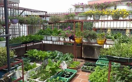Vườn rau sạch trên sân thượng khiến nhiều người mơ