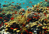 China renovates reefs, Vietnam to suffer huge losses
