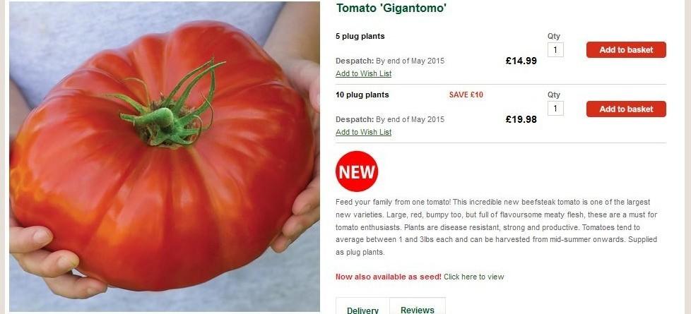 Cà chua 'khủng' nặng 1 kg/quả gây sốt