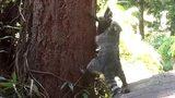 Gấu mẹ tận tình dạy con cách trèo cây