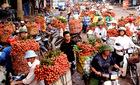 Thương lái Trung Quốc ngừng mua, vải thiều rớt giá thê thảm