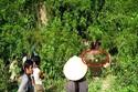 Hiện trường vụ thảm án giết 4 người rúng động xứ Nghệ