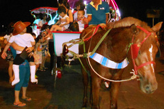 Về Quy Nhơn dạo phố đêm bằng xe ngựa
