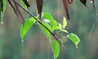 Sau 'cơn mưa vàng', miền Bắc tiếp tục có mưa to