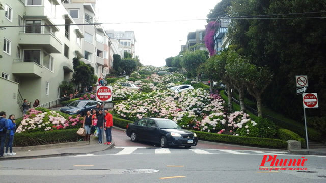 Con đường hoa nổi tiếng thế giới ở San Francisco