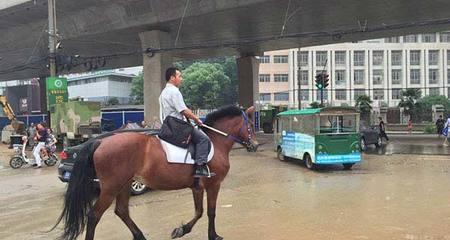 Đổi xế hộp lấy ngựa để cưỡi đi làm