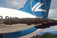 Hoãn chuyến vì máy bay bị cả bầy ong tấn công