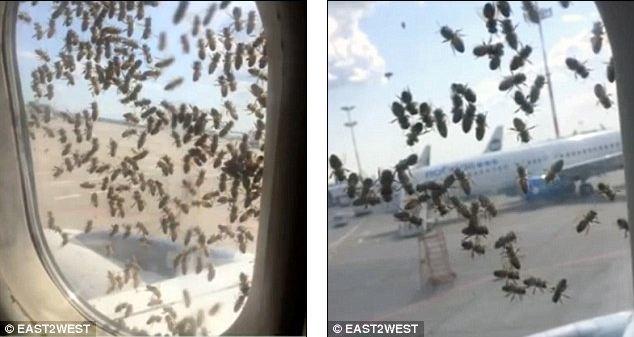 máy bay, ong, sân bay