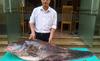 Hà Nội: Xẻ thịt con cá Leo Campuchia 62kg