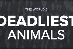 Loài động vật nào nguy hiểm nhất thế giới?