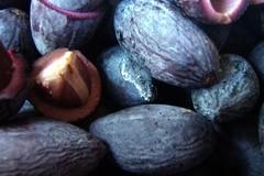 Vào rừng trồng trám đen thu về trăm triệu