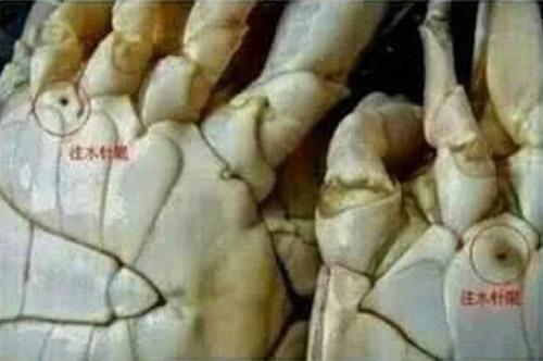 Cua có lỗ trên thân là cua bị tiêm hóa chất